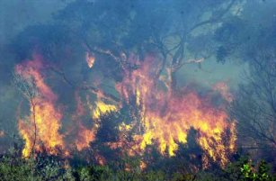 Burning vegetation