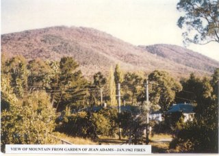 View of mountain from garden of Jean Adams - January 1962